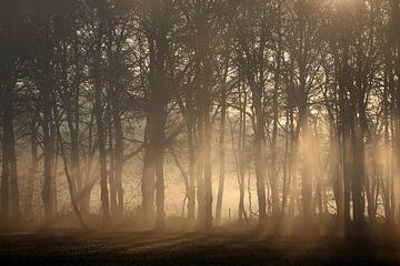 Nebliger Morgen von Herman van Alfen