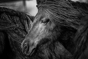 Pony Schwarzweiß-Portrait von Jeroen Mikkers