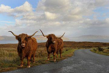 Schotse hooglanders. von Tilly Meijer
