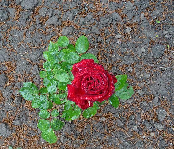 FlowerPower Fantasy 21 - Roos! van MoArt (Maurice Heuts)