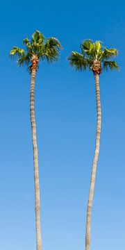 Palmenidylle von Melanie Viola