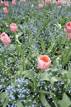 Flowers 2 van Lyn Van Veldhoven