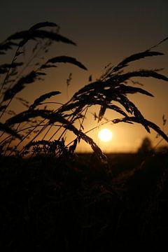 zonsondergang  van kenneth anno