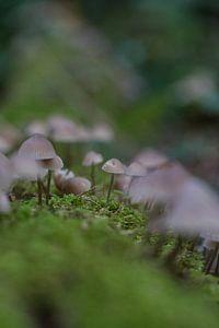 Een kleine leger paddenstoelen van Wesley Klijnstra