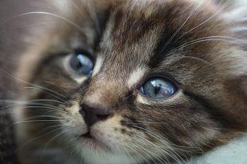 Mini kitten van Floor Singelenberg