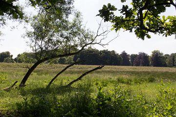 Baumstämme geben mit dem Wind im Mechels Broek von didier de borle