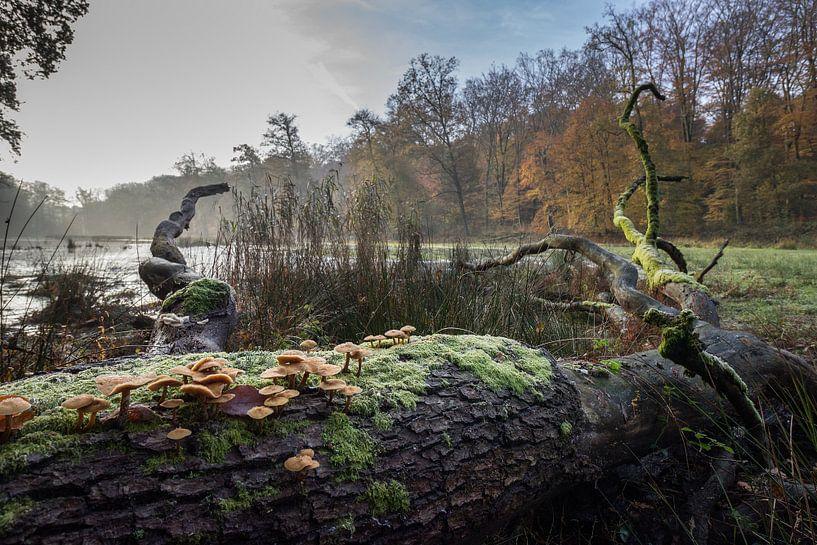 Herfst van Heidi Bol