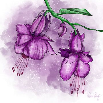 Blumenmotiv - Fuchsien violett