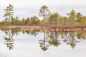 Natuur   Bossen en meren in Estland 2