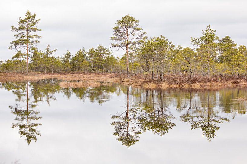 Natuur   Bossen en meren in Estland 2 van Servan Ott