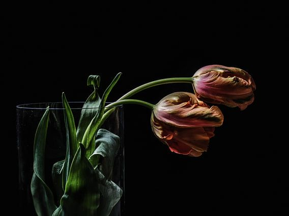 Twee tulpen
