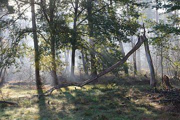 Wald im Nebel von Evelien IJpelaar