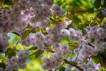 Japanische Kirschblüte von FotoGraaG Hanneke