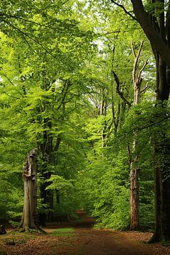Frisches Frühlingsgrün in einem Wald von Pim van der Horst