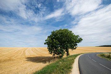 Boom langs de weg in Frankrijk van Kristel van de Laar