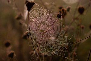 duister spinnenweb van