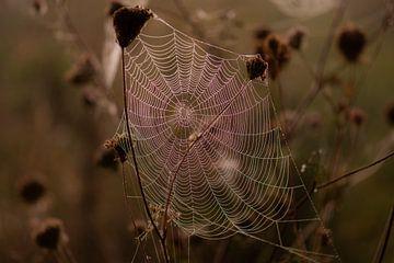 dunkles Spinnennetz von Tania Perneel