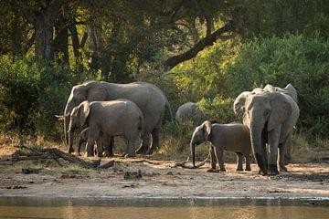 Les éléphants au bord de l'eau sur Andius Teijgeler