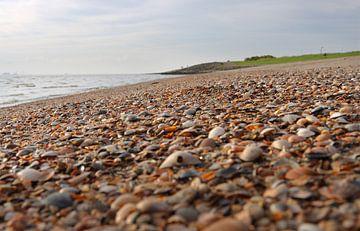 Muscheln am Strand von Rolf Pötsch