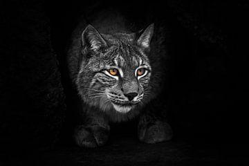 streng und furchterregend in der Höhle. Luchs in der nächtlichen Dunkelheit bei Nacht, helle Augen l von Michael Semenov