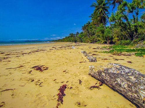 Verlaten strand bij de 'wet tropics' in Queensland, Australie