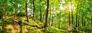 Wald in der Eifel von Günter Albers