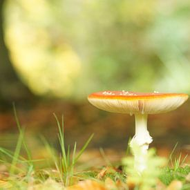 Autumn van Carla Mesken-Dijkhoff