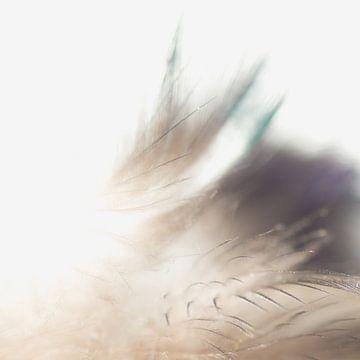Feather soft 4 sur Greetje van Son