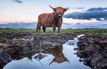 Rood Bruine Schotse Hooglander von Martijn van Dellen