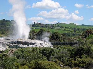 Geiser in Rotorua