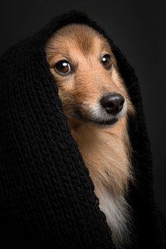 Sheltie portret van Elles Rijsdijk
