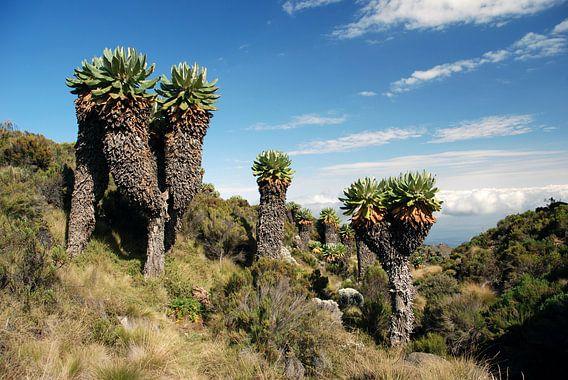 Kilimanjaro landschap van Gert-Jan Siesling