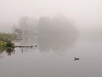 Floating in Fog von Lena Weisbek