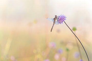 Libelle im Morgentau. von Francis Dost