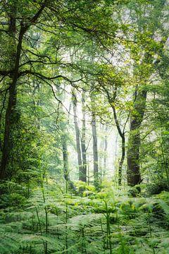 Groene ochtend Vibes van Joris Pannemans - Loris Photography