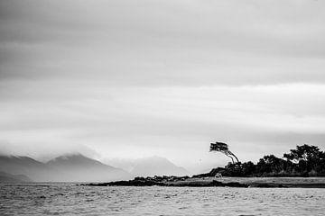 Chili - eenzame misvormde boom von Jack Koning