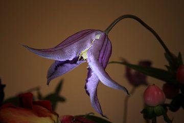Blume, alter Meisterstil, exotisch, violett von Pim Klabbers