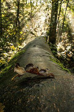 Blatt am Baum von Robert Snoek