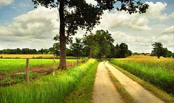Landschap met landweg van