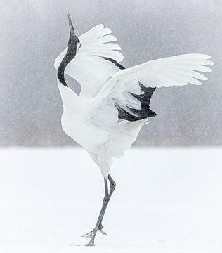 Tanzender japanischer Kranich von Gladys Klip