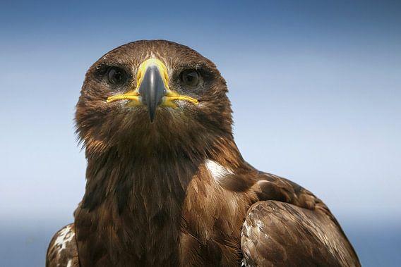 Roofvogel van RVFotoproducties Tilburg