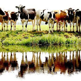 cows in a row van Annemieke van der Wiel
