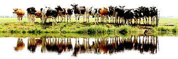 Kühe aufgereiht von