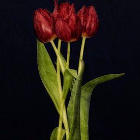 Rode tulpen van Leon Brouwer