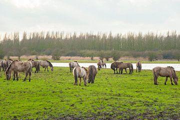 Konikpaarden 4 van Brian Morgan