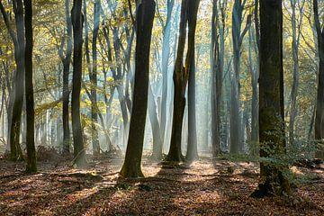 Stralend Speulderbos in de herfst van Cor de Hamer