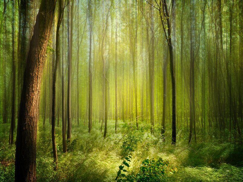 Forêt d'Acacia au soleil van Ruxandra Proksch