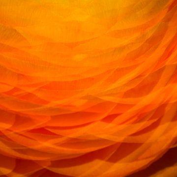 Oranje 1 van Jose Gieskes