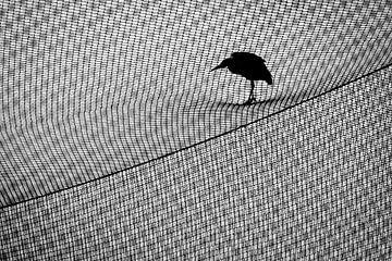 Reiger op Net von Marijn Heuts
