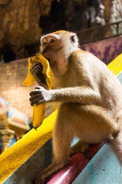 Banaan etende aap van Ludo Marrink